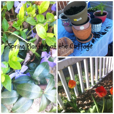 apg planting at cot