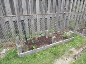 This is the Tomato and Herb Garden.  It is surrounded by chicken wire due to the proliferation of rabbits in our area.
