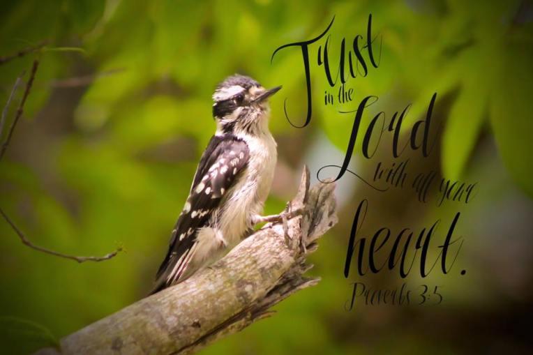 trust bird
